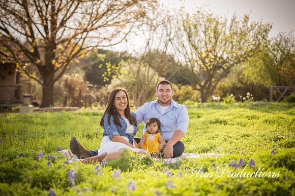 bluebonnet family portraits